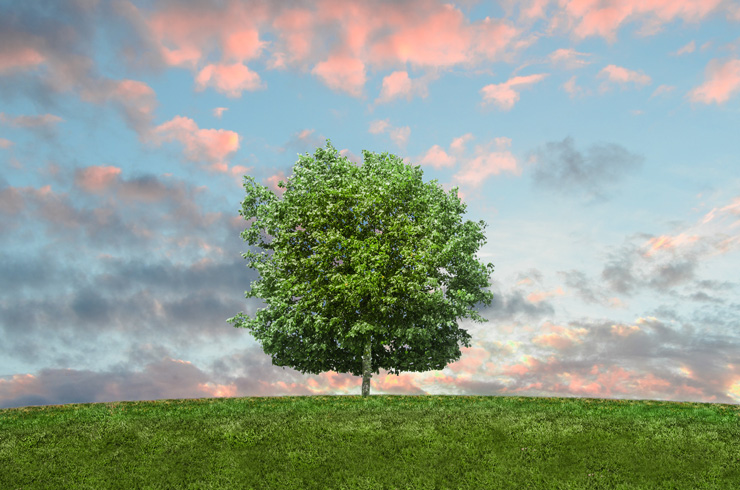 Approaching Spring with a Sustainable Mindset, by Jori Hamilton. Photograph of green tree by Skitter Photo